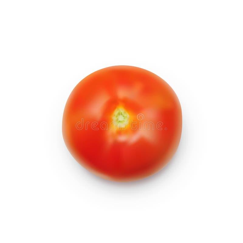 Tomate rouge mûre réaliste d'isolement sur le fond blanc photographie stock