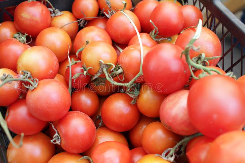 Tomate Tomates Fruits organiques Salade photographie stock