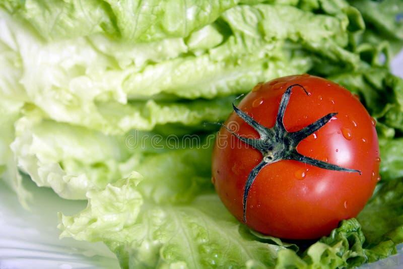 Tomate und Blatt lettuce1 lizenzfreie stockfotos