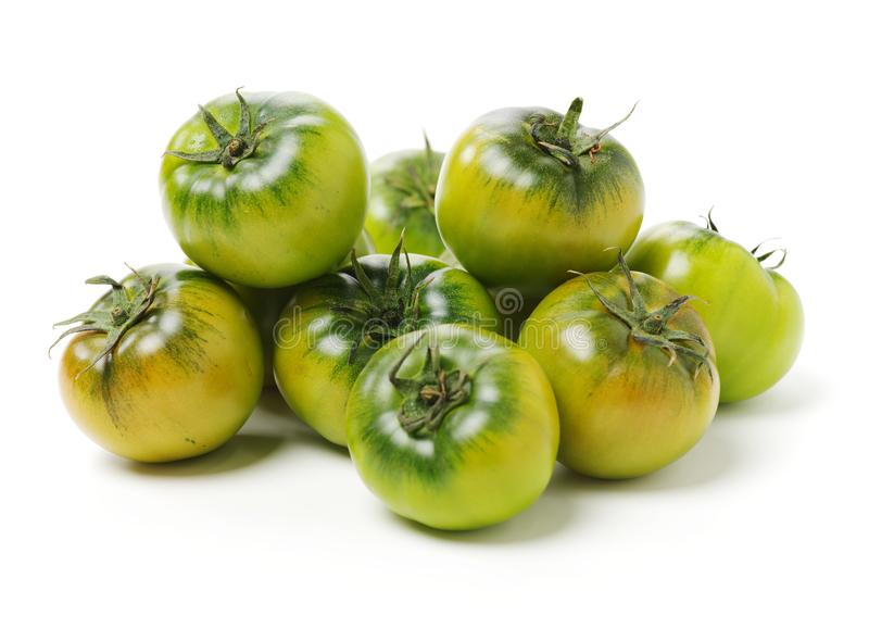 Tomate verde fresco fotos de archivo libres de regalías