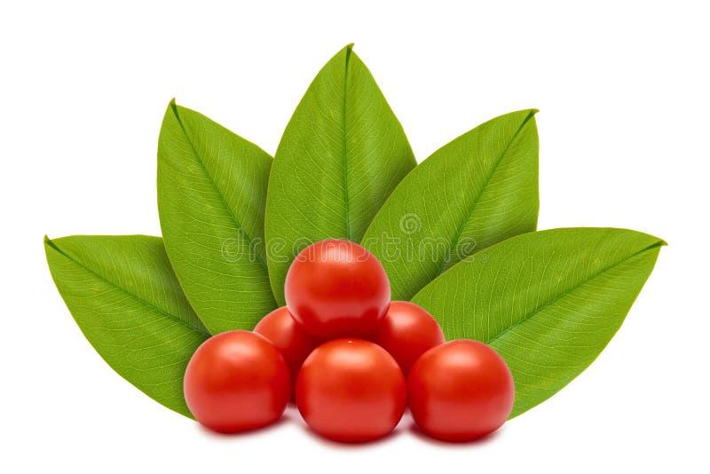Tomate vermelho orgânico fresco no fundo das folhas verdes Isolado no branco conceito da origem natural ilustração royalty free