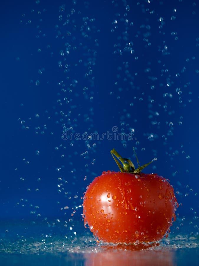 Tomate y agua imagenes de archivo