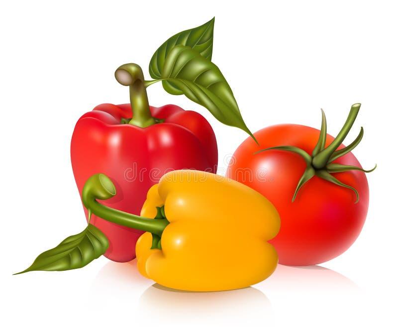 Tomate y pimientas maduros. stock de ilustración