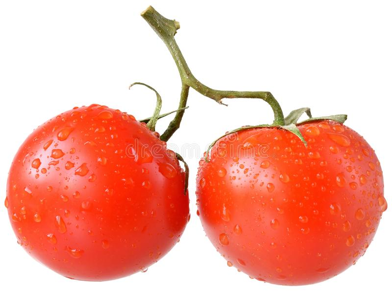 Tomate zwei auf der Niederlassung lokalisiert stockbild