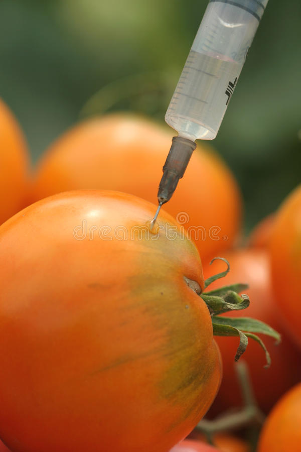 Tomateeinspritzung stockfoto