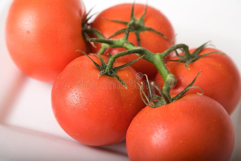 Tomaten 1 royalty-vrije stock afbeelding
