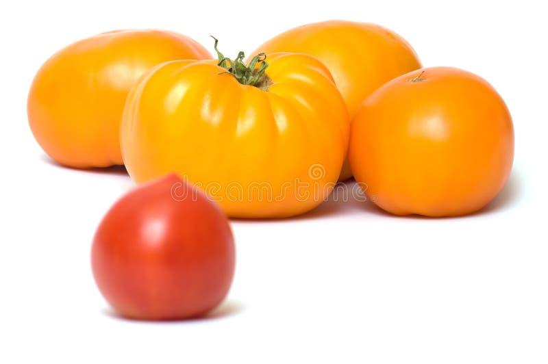 Tomaten. lizenzfreie stockfotografie