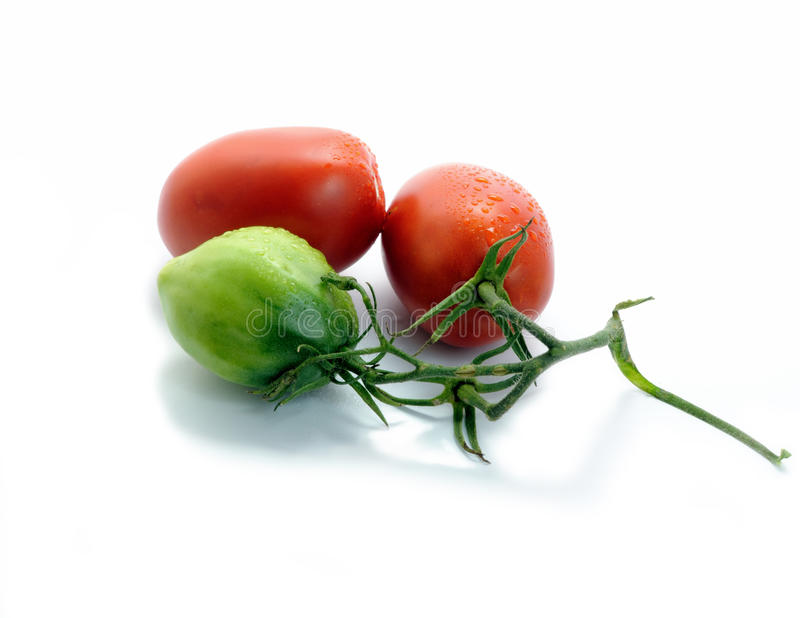 Tomaten lizenzfreie abbildung