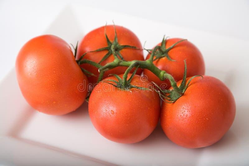 Tomaten 2 lizenzfreies stockfoto