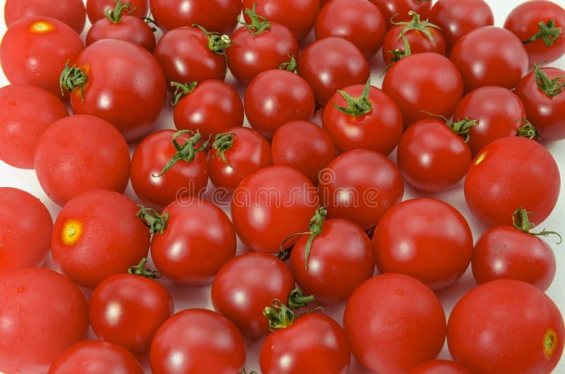 Tomaten stock afbeelding