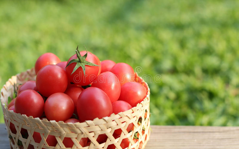 Tomaten, an auf dem alten Holztisch lizenzfreie stockfotografie