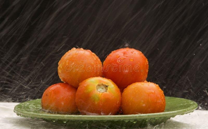 Tomaten in de regen stock foto's