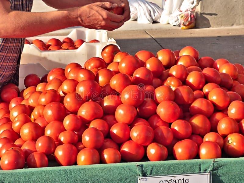 Tomaten in een kleinhandelsvertoning stock afbeeldingen