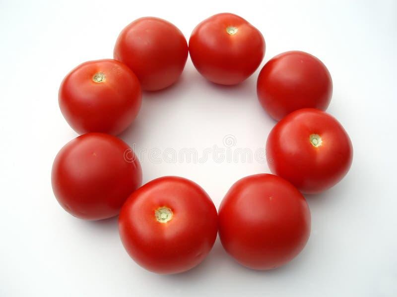 Tomaten in einem Kreis stockbild