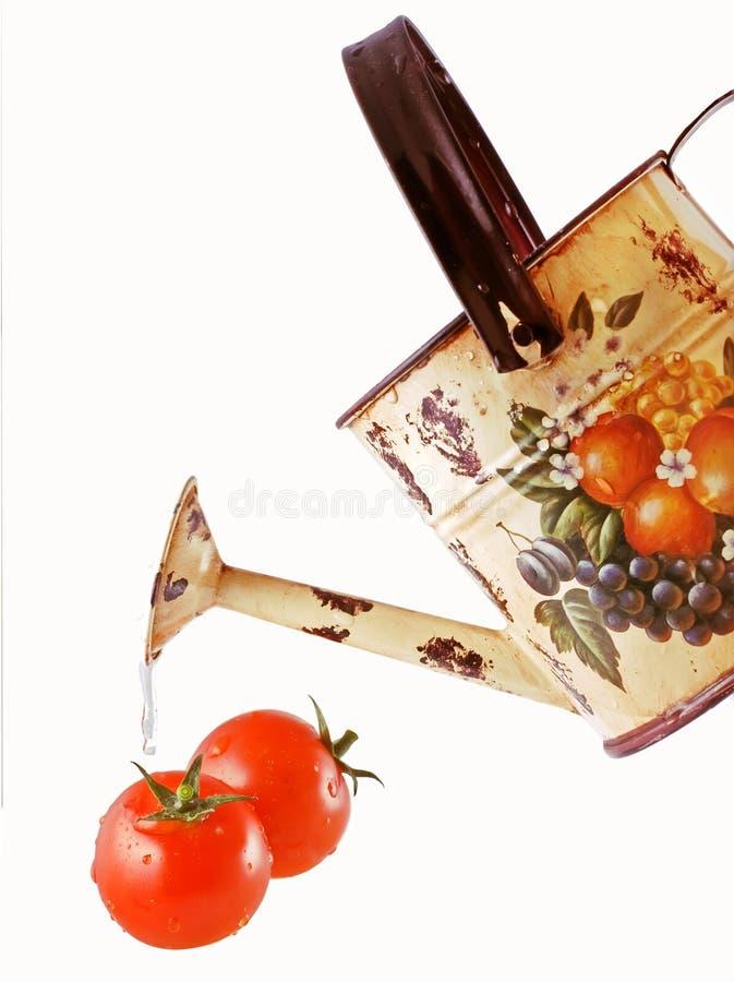 Tomaten en een het water geven pot royalty-vrije stock foto