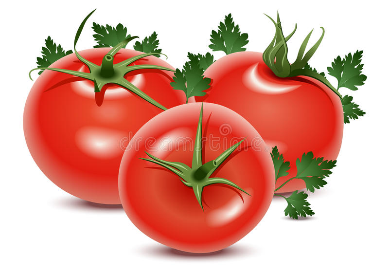 Tomaten en peterselie vector illustratie