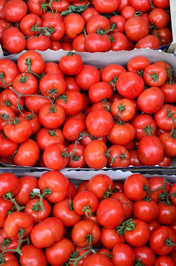 Tomaten in kartonkratten royalty-vrije stock foto