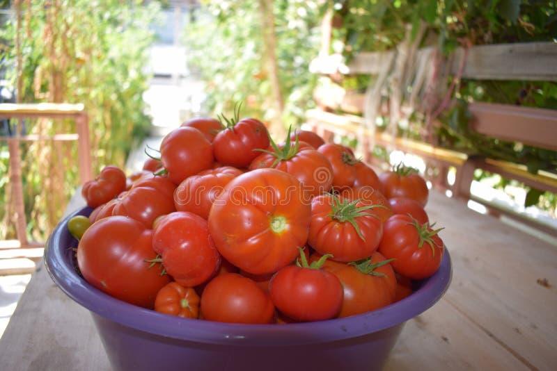 Tomaten-Korb stockbild