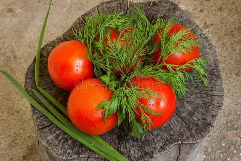 Tomaten met kruiden stock foto