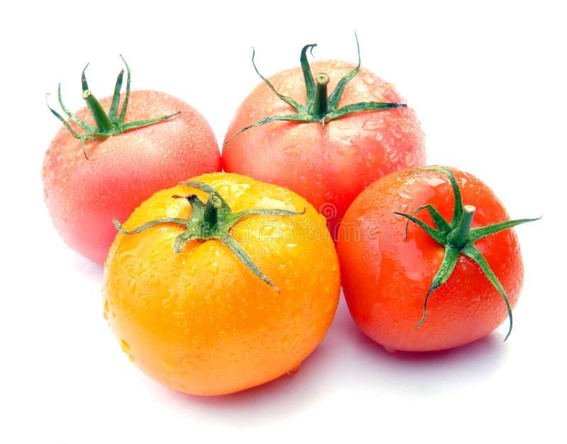 Tomaten mit Tropfen stockbild
