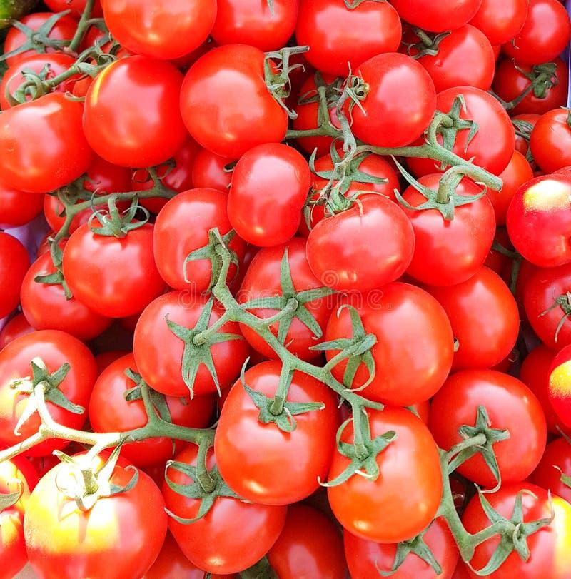 Tomaten op de wijnstok heldere en smakelijke groente stock foto's