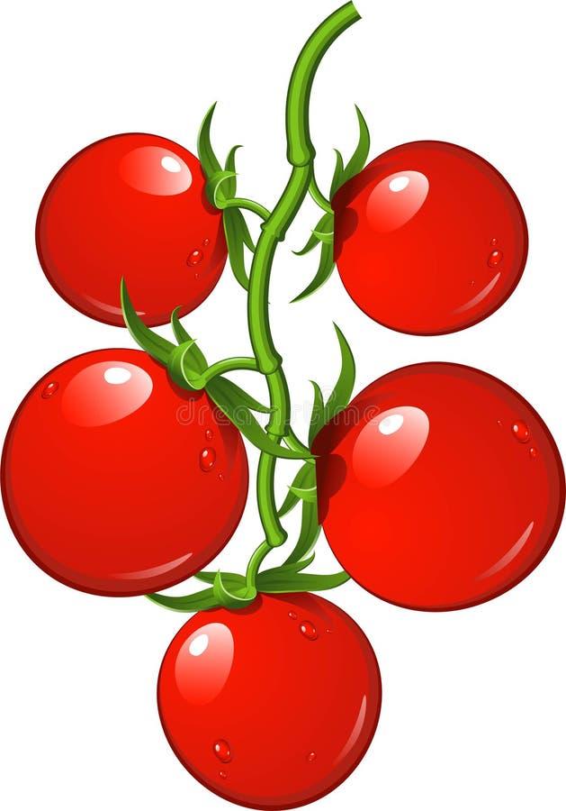 Tomaten op een tak stock illustratie