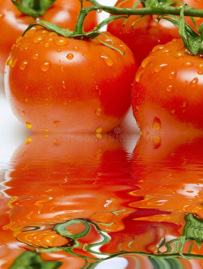Tomaten op tak met waterdalingen met bezinning royalty-vrije stock fotografie