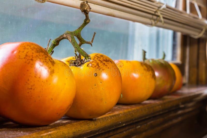 Tomaten op venstervensterbank royalty-vrije stock afbeeldingen