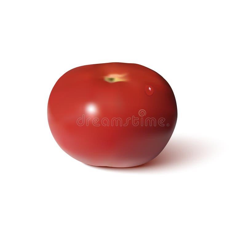 Tomaten rode realistisch royalty-vrije illustratie