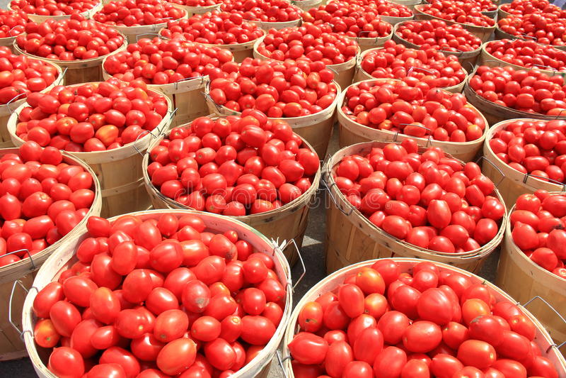Tomaten-Scheffel 1 lizenzfreie stockbilder