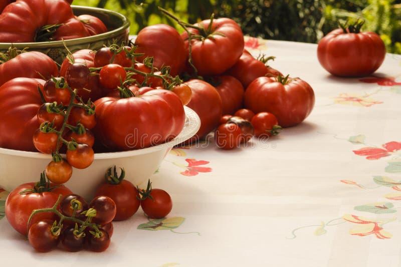 Tomaten-Tomaten stockfotografie