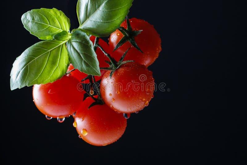 Tomaten und Basilikumblatt auf schwarzem Hintergrund lizenzfreie stockbilder