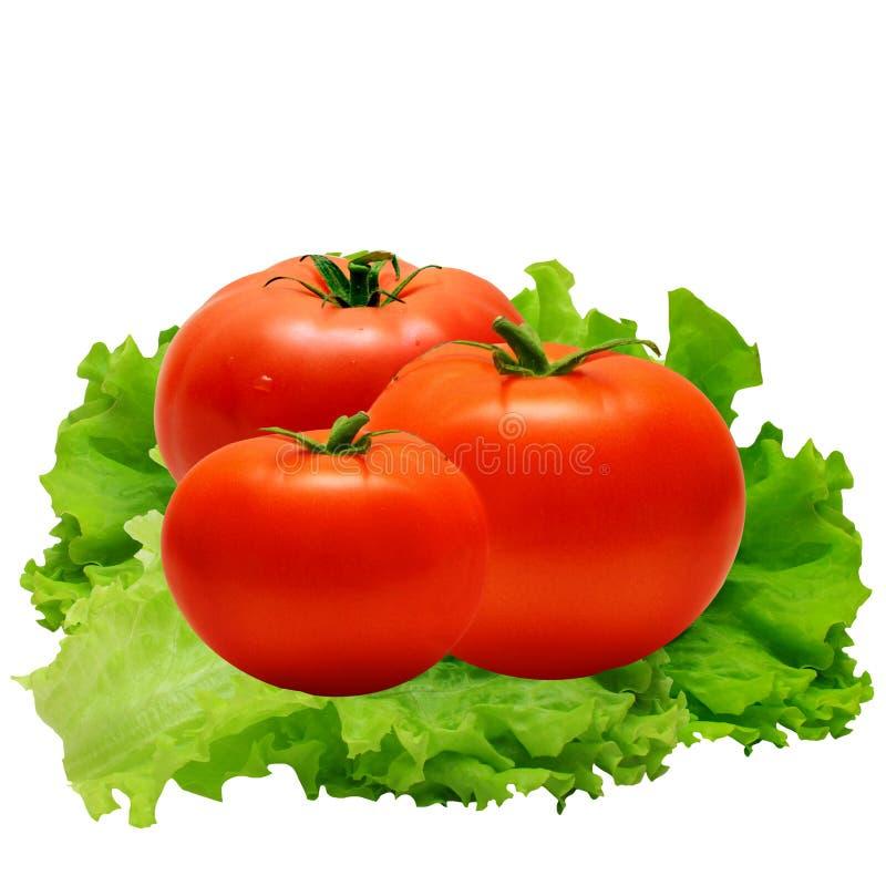 Tomaten und Salatblätter lizenzfreie stockbilder