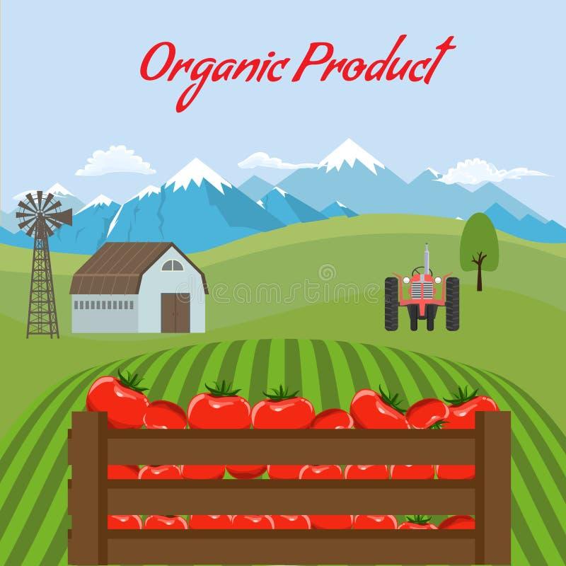 Tomatenmodell im Bauernhoflandschaftshintergrund Aufkleberentwurf für Tomatenprodukte Flache Farbart-Vektorillustration vektor abbildung