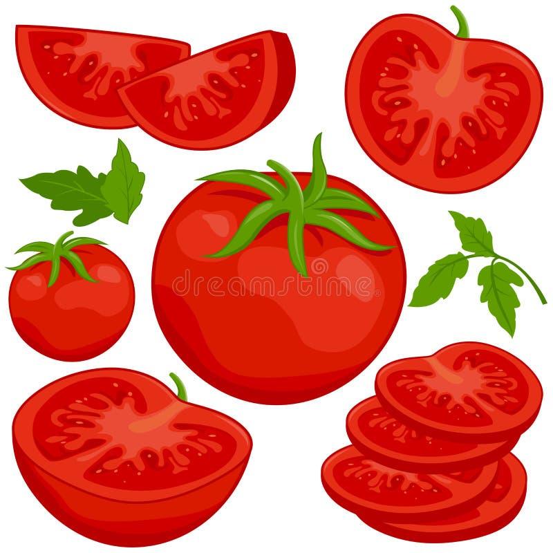 Tomater vektor illustrationer