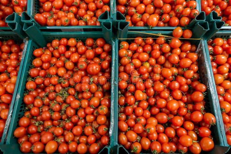 Tomater i askar arkivfoton