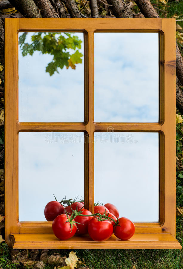 Tomater på en spegelavsats royaltyfria foton