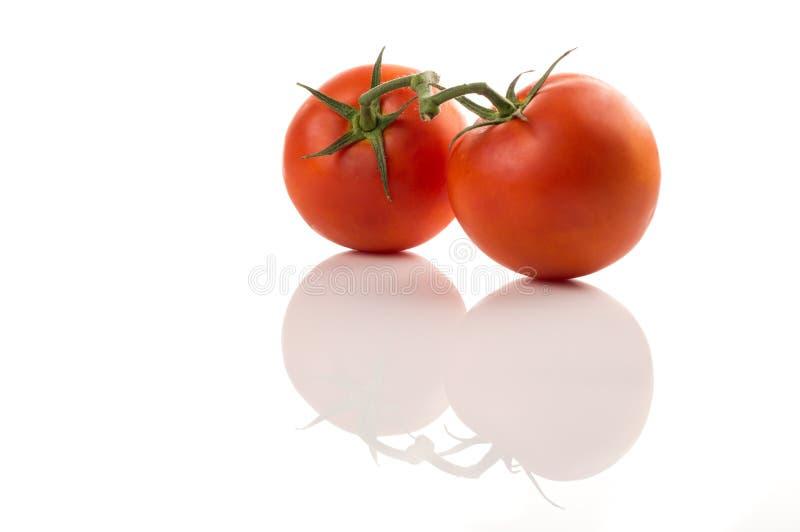 Tomater på vit isolerad bakgrund royaltyfri fotografi