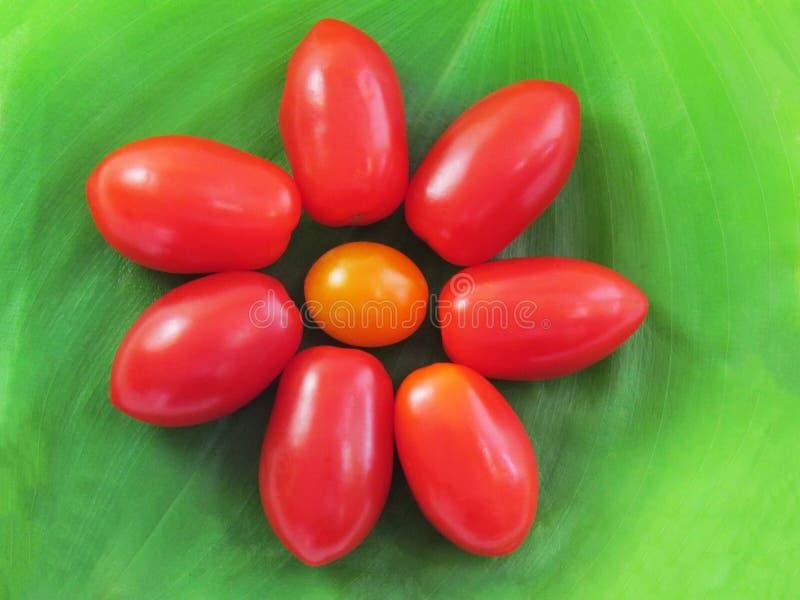 Tomater som är ordnade i form av blommor arkivbild