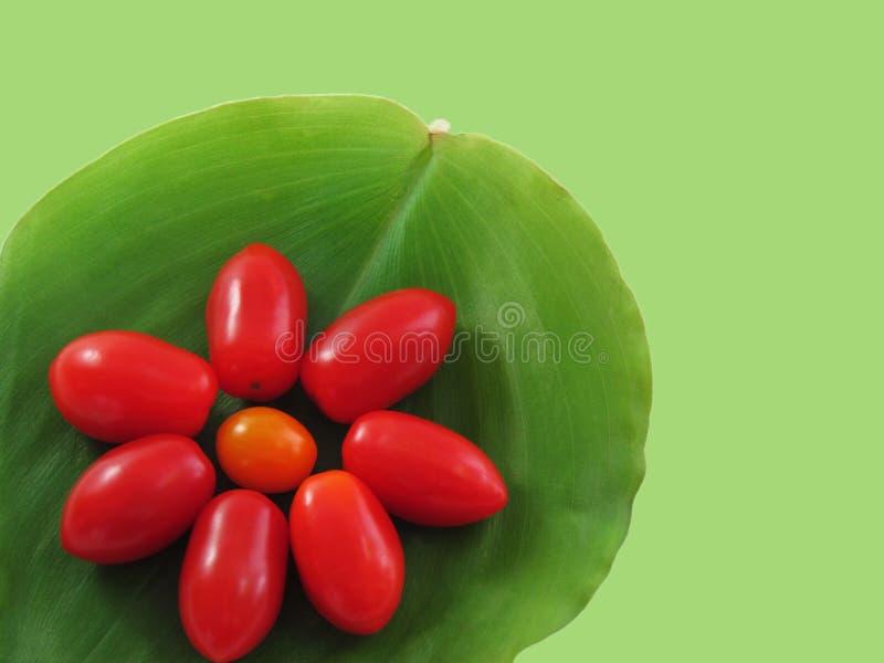 Tomater som är ordnade i form av blommor royaltyfria bilder