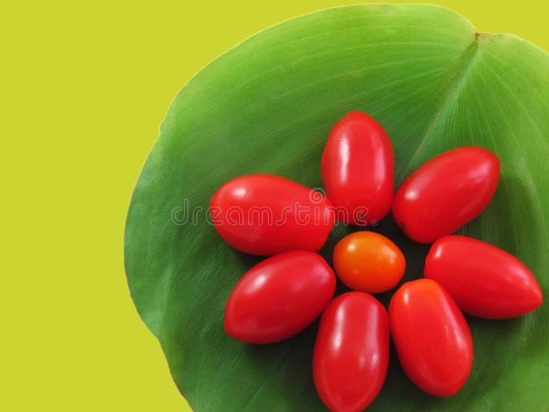 Tomater som är ordnade i form av blommor royaltyfri bild