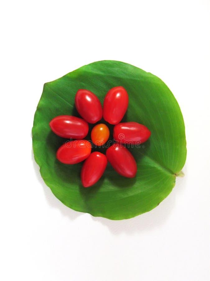 Tomater som är ordnade i formen av blommor på en grön lövverk på royaltyfri fotografi