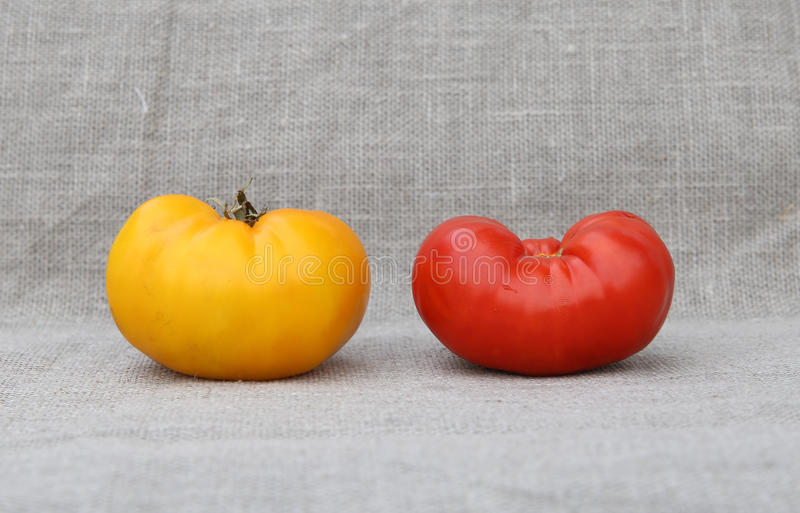 tomater två Rött och gult arkivfoto