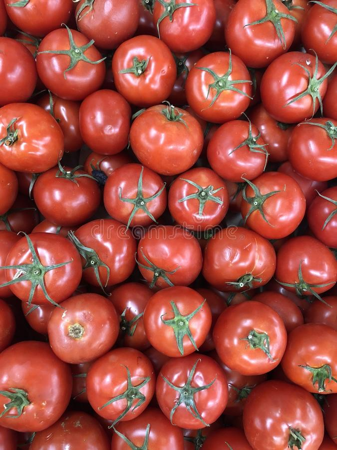 Tomates images stock