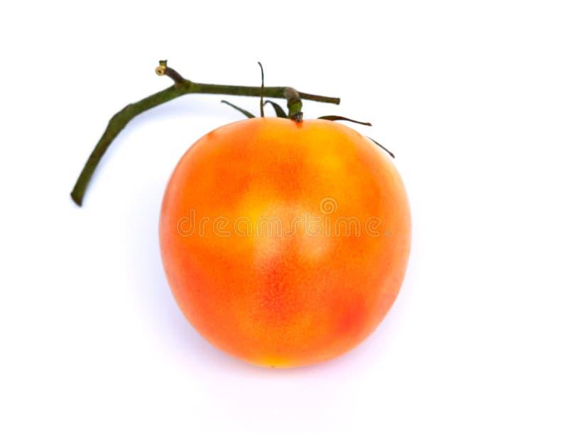 Tomates alaranjados frescos, isolados nos conceitos brancos de um fundo, nos vegetais, hortas e como um alimento natural Ilustraç fotografia de stock