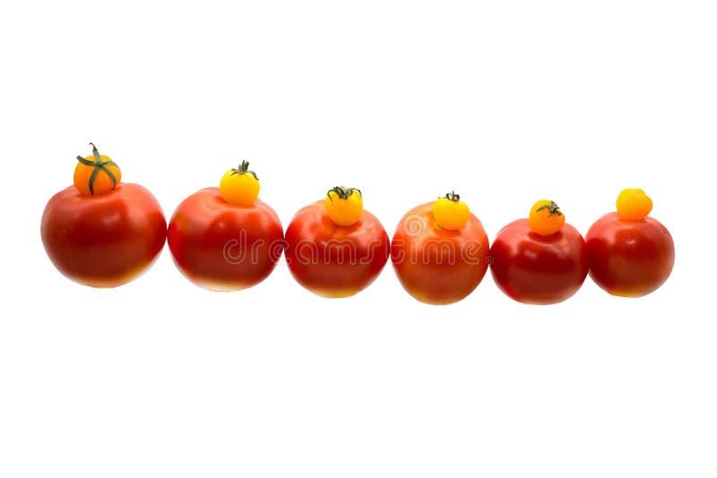 Tomates amarillos y rojos fotos de archivo