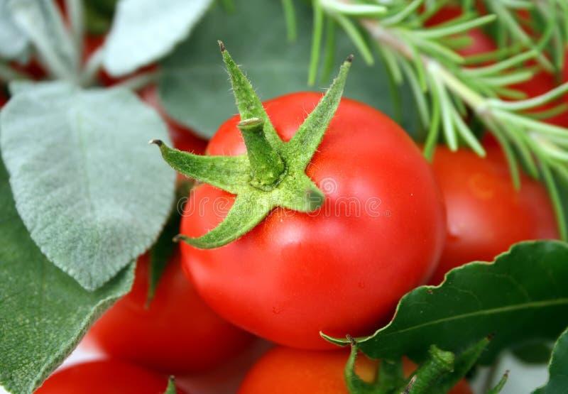 Tomates avec des épices photos stock