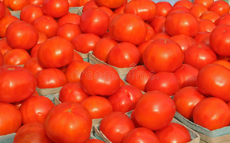 Tomates brilhantes 2 imagens de stock