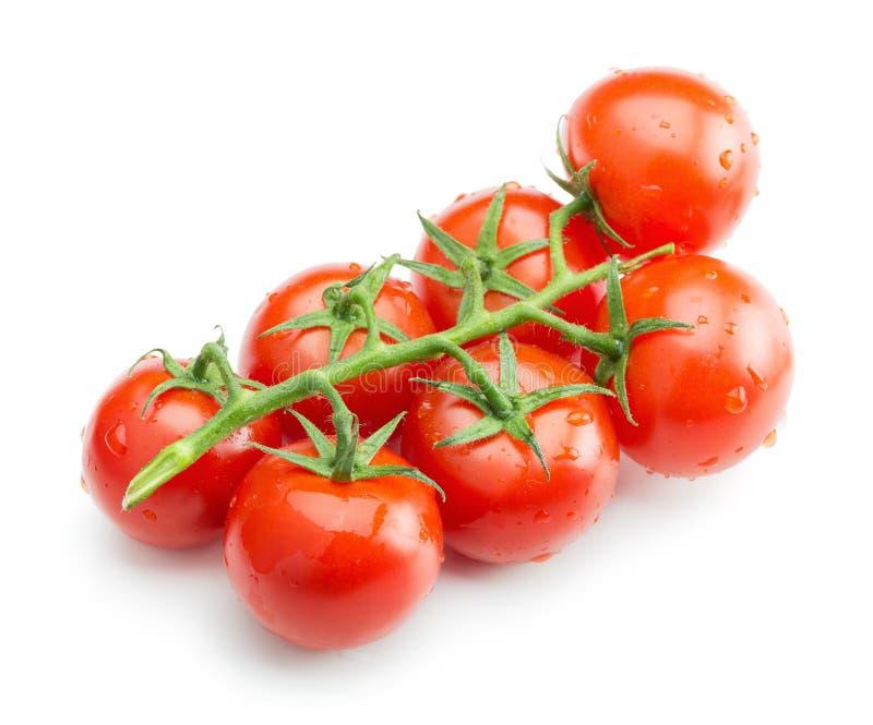 Tomates-cerises d'isolement sur le fond blanc image stock
