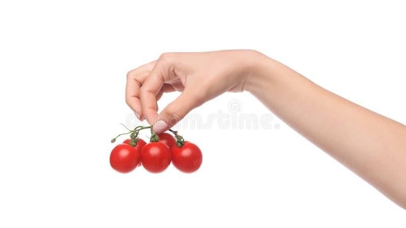 Tomates-cerises de groupe à disposition sur le fond blanc image libre de droits